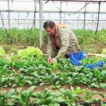 イタリアにも自然農家さんが!